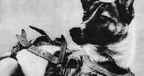 Laika  Soviet dog